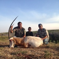 Louis's Scimitar-Horned Oryx